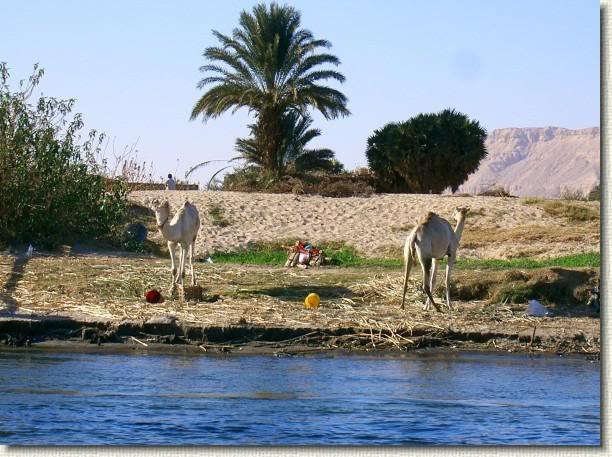 les rives du Nil
