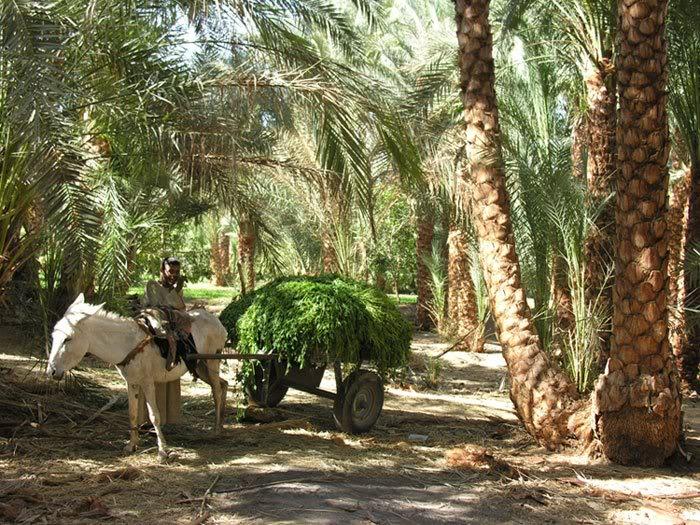 balade dans la campagne Egyptienne